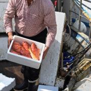 biofoam fish box 3